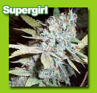 supergirl cannabis