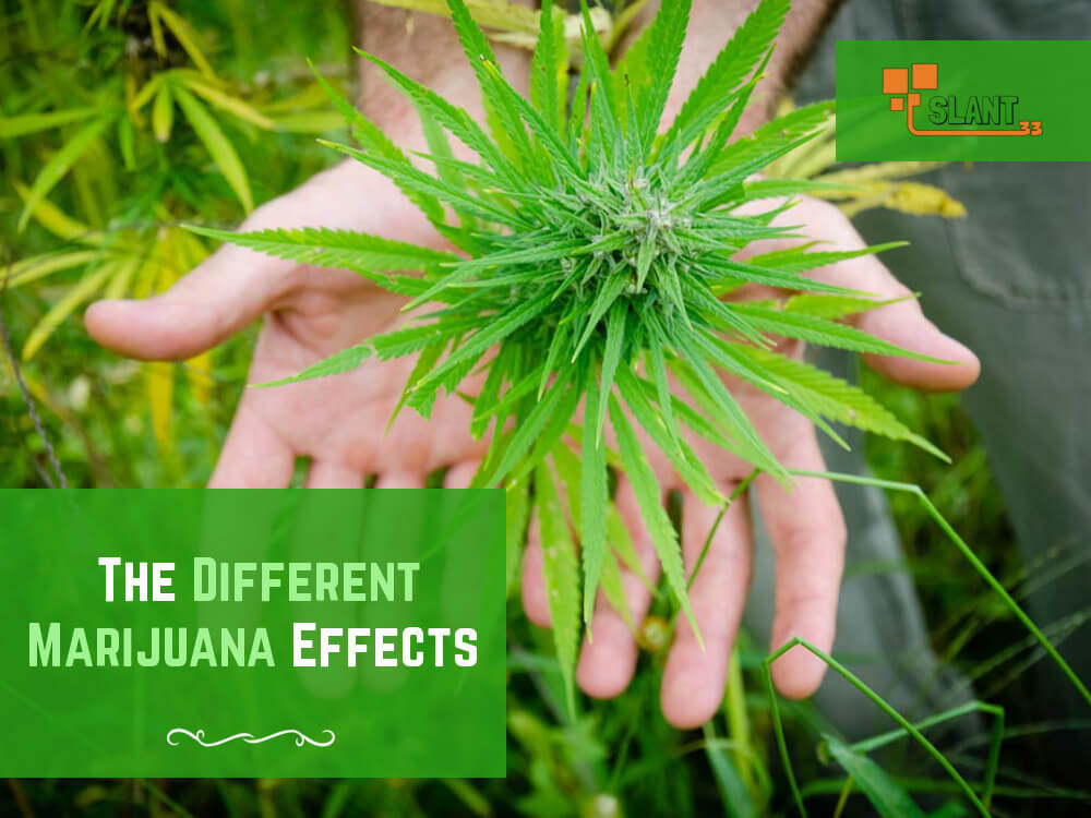 What Are The Different Marijuana Effects When Smoking Cannabis