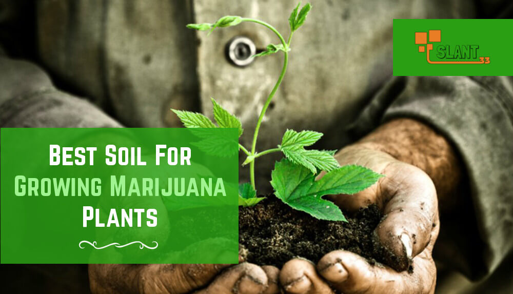 What Types of Soil Should You Use When Growing Marijuana Plants