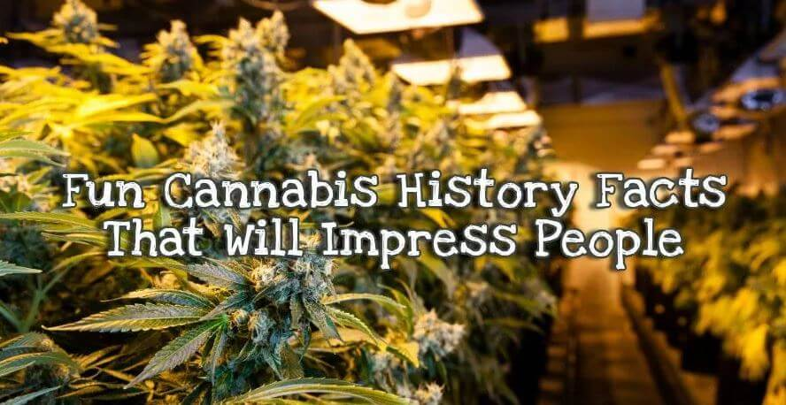 cannabis history facts