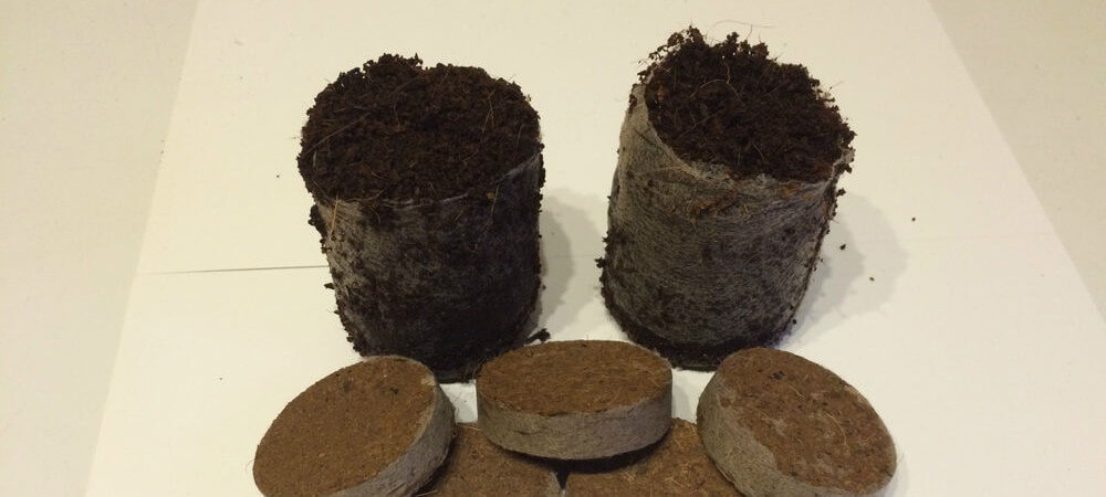 growing cannabis in peat pellets