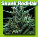 skunk_redhair_cannabis