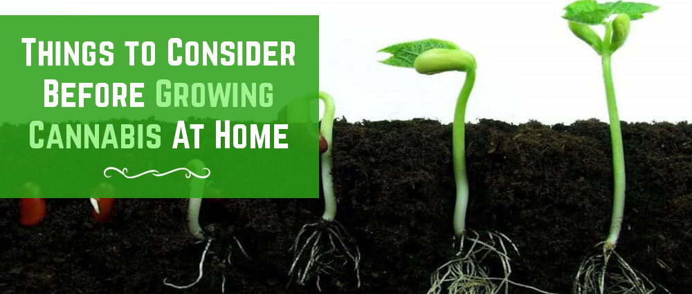 top 4 things to consider before growing cannabis at home